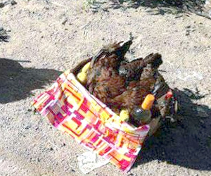 Ritos umbanda con sacrificio de animales en Añatuya