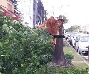Caida de árboles en Charata por fuerte viento